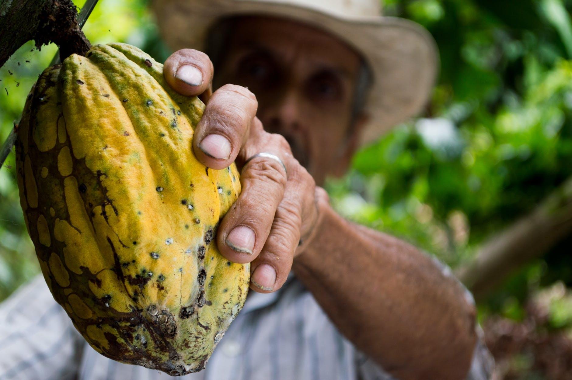 Organic vs. Locally Grown Food