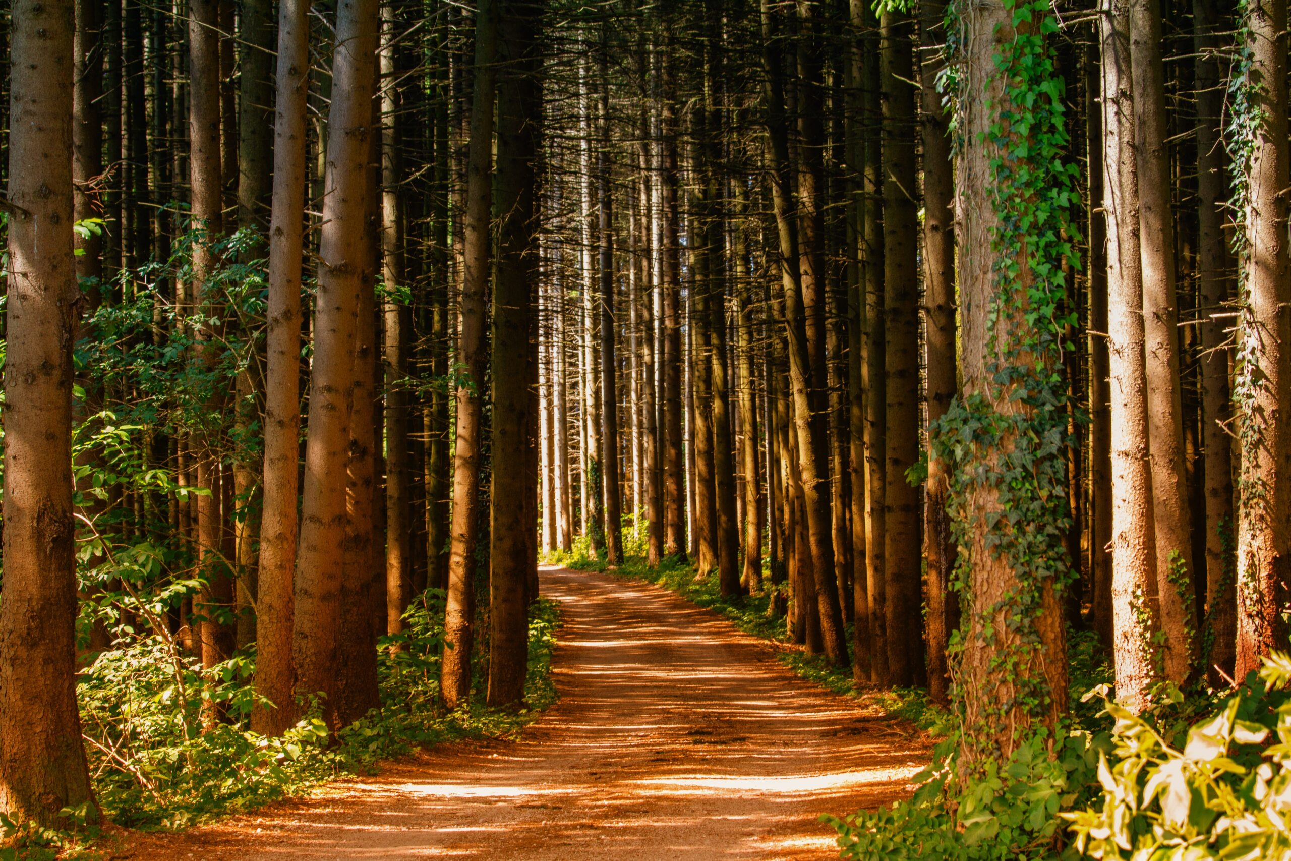 Health benefits of forest bathing